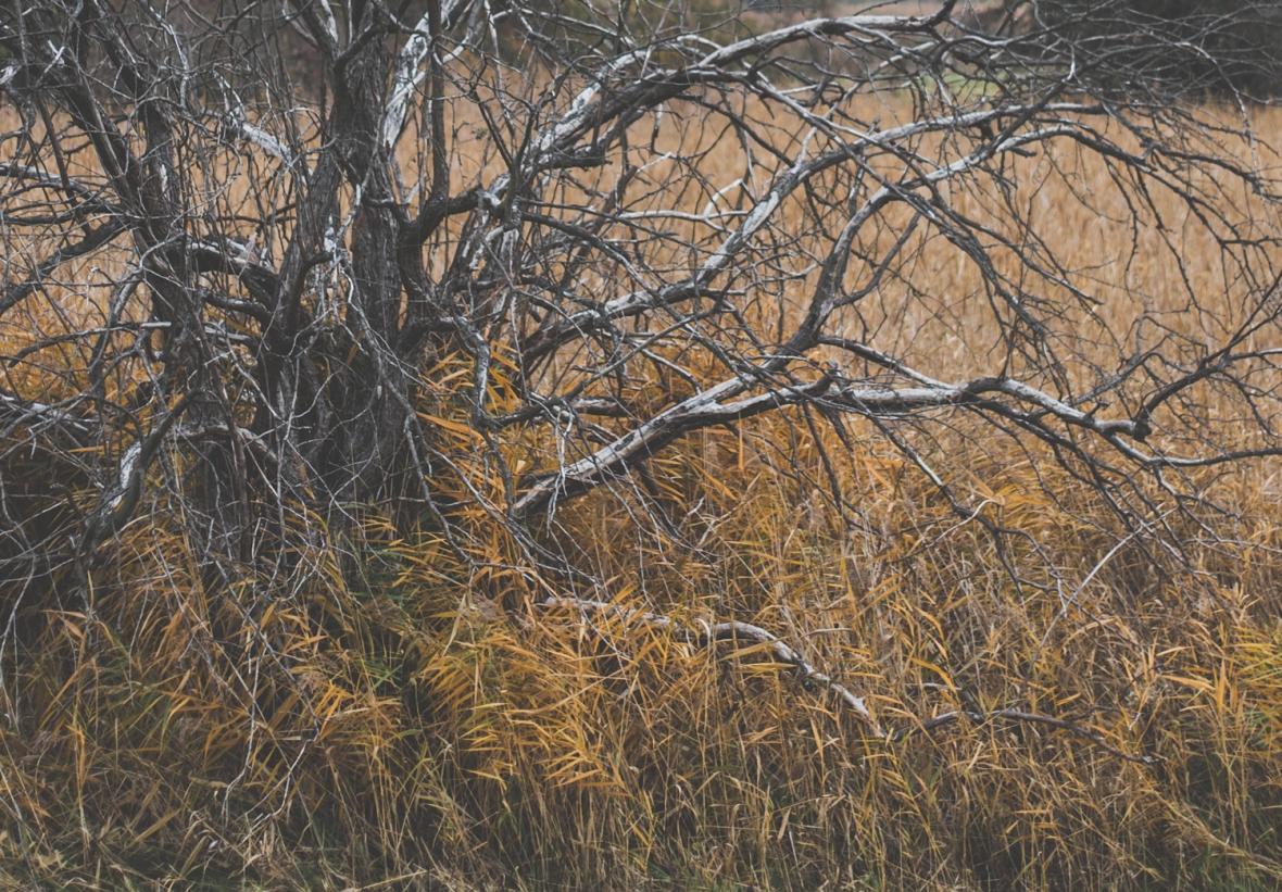 AmErsten© 2018 Stephan Noe-8467.jpg