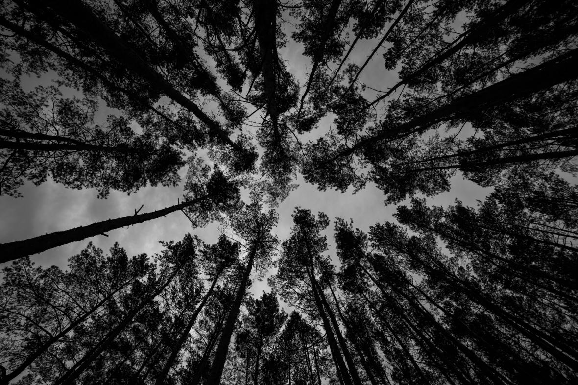 AmSiebenundzwanzigstenApril© 2019 Stephan Noe-1571