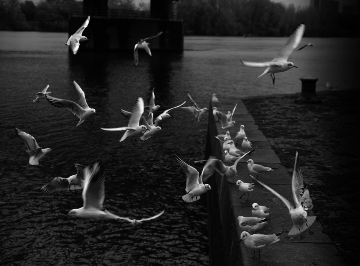 AmDreizehntenNovember© 2019 Stephan Noe-4843-2